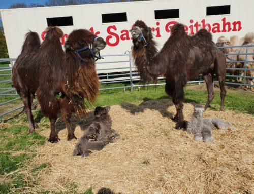 Safari-Reitbahn in Not: rund 100 Tiere brauchen Hilfe